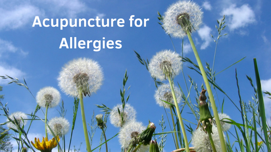 acupuncture victoria bc, acupuncturist victoria bc, acupuncture for allergies, acupuncture clinic