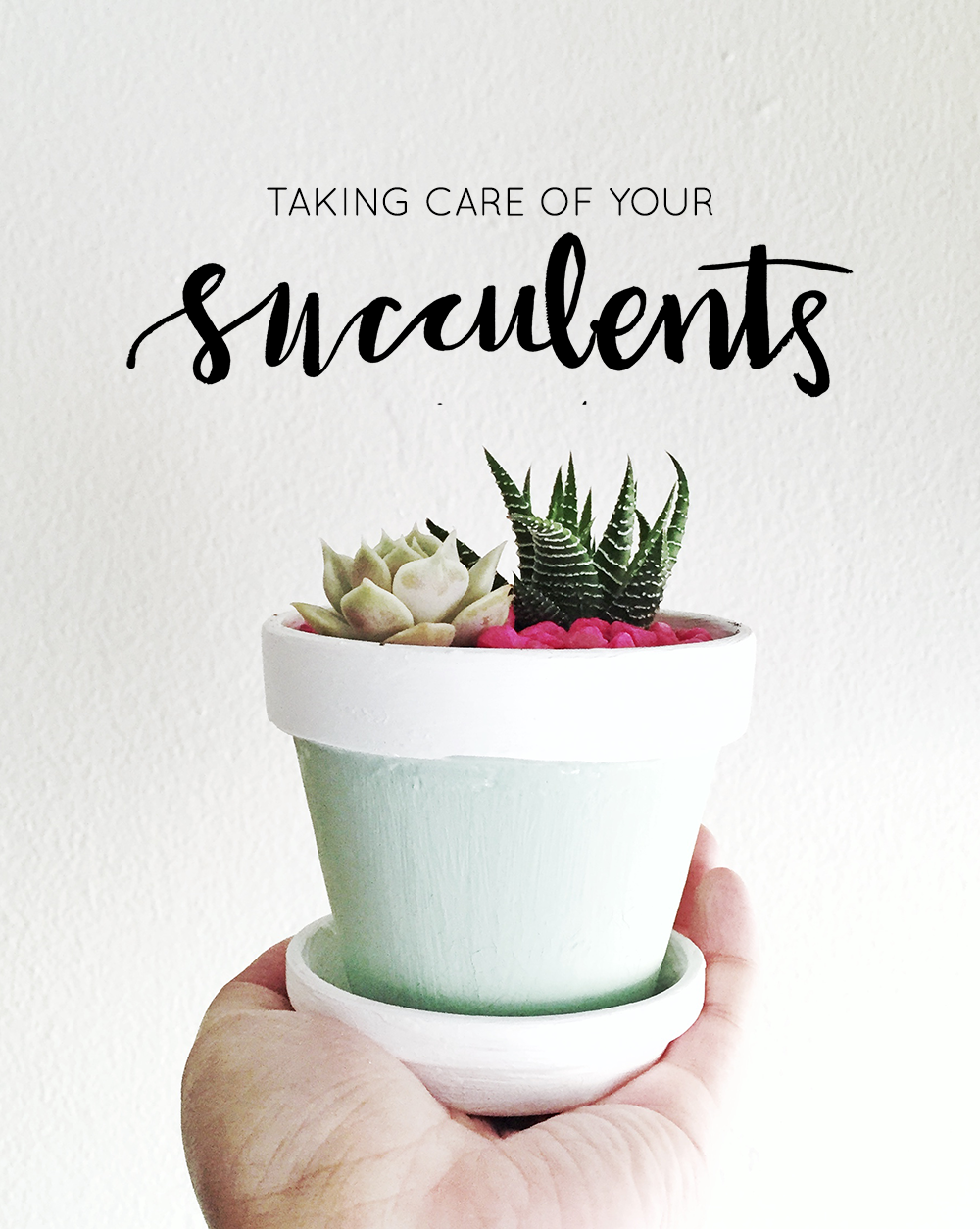 hey-love-designs-succulents.png