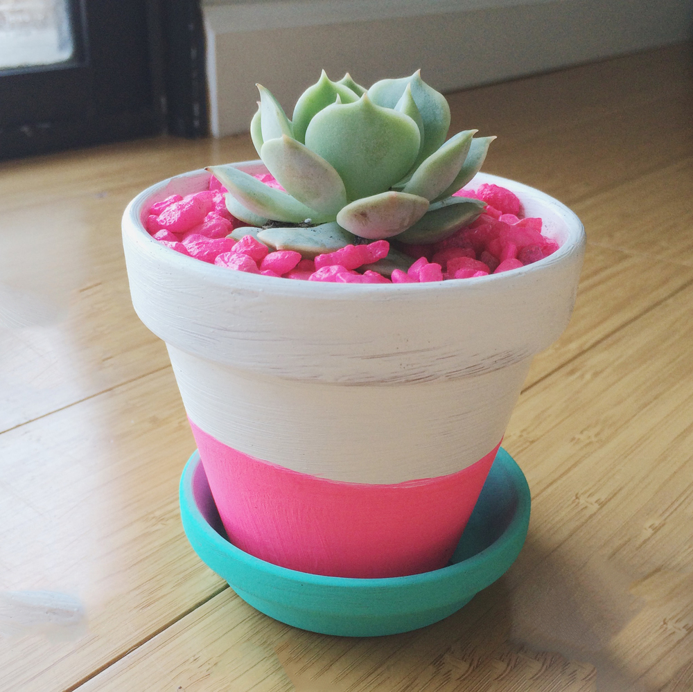 DIY Neon Succulent Pots | Hey Love Designs