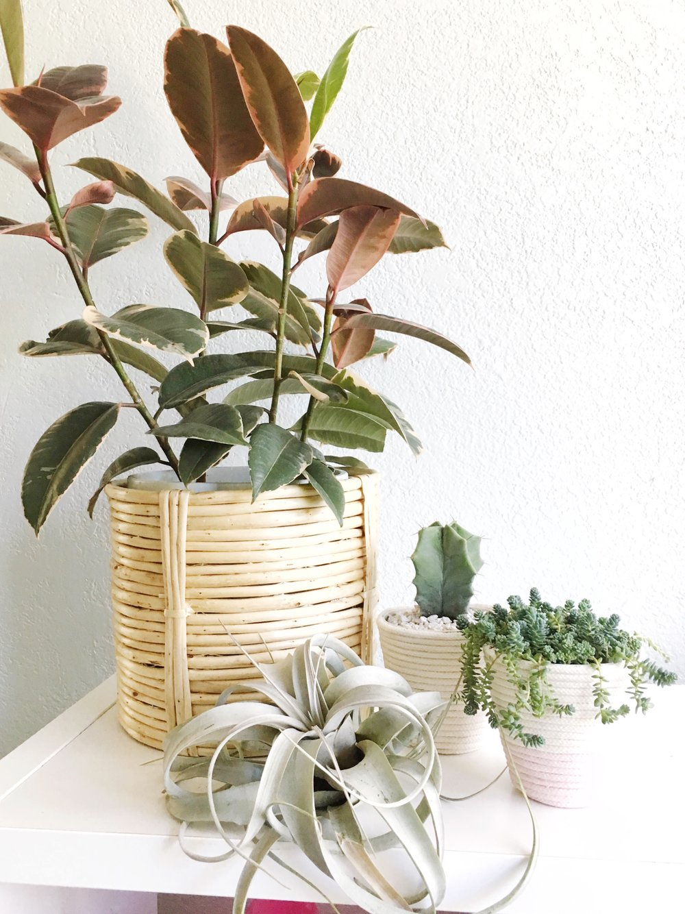 Learn how easy it is to make a rope planter simply with a cheap planter, cotton clothesline, and hot glue. Add a soft look to your new plants with this simple tutorial from Hey Love Designs.