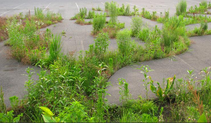 dendritic_decay_garden-1a.jpg
