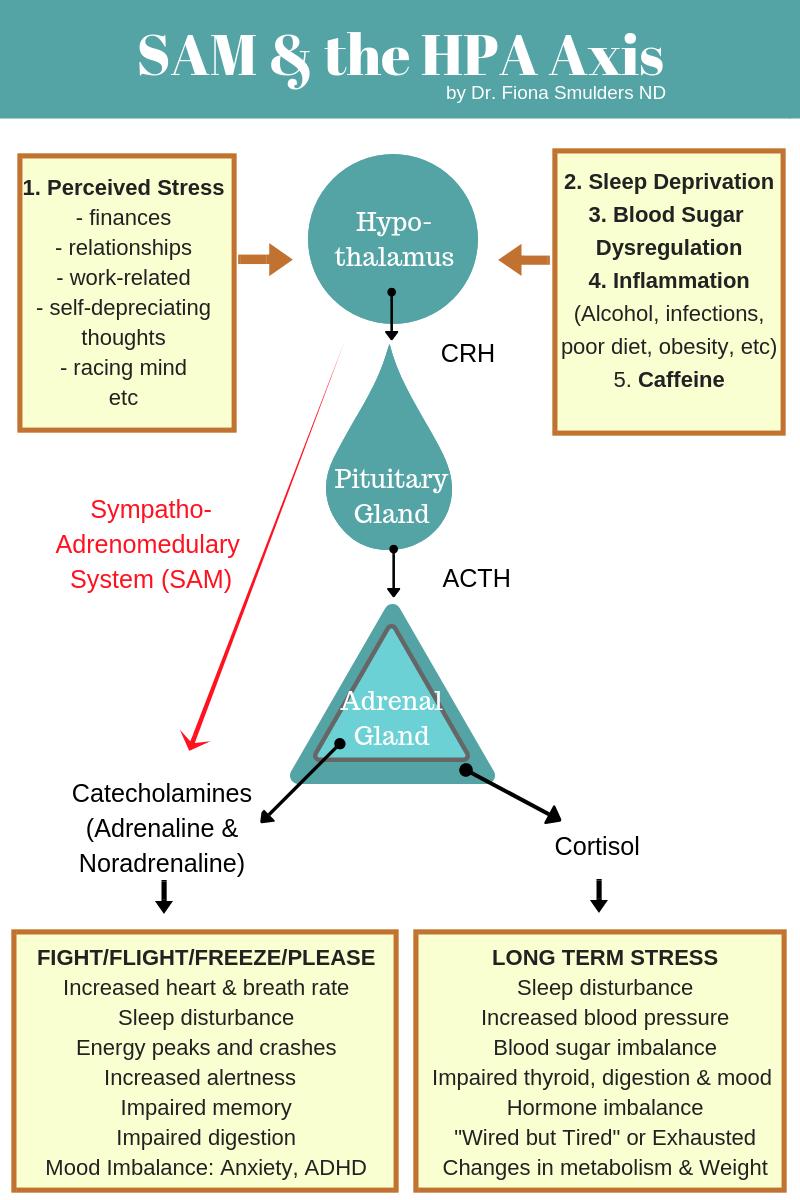 CRH  = Corticotropin Releasing Hormone.  ACTH  = Adrenocorticotropic Hormone.  SAM  = Sympathoadrenomedulary.  HPA  = Hypothalamus-Pituirary-Adrenal