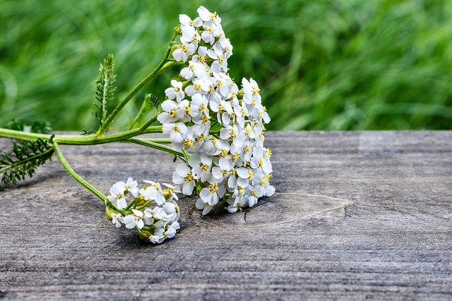Learn About Your Local Medicinal Plants - The Pacific Northwest is filled with wild medicinal plants that can treat almost any ailment. Visit this page to learn how to identify, harvest, prepare and use local medicinal plants.