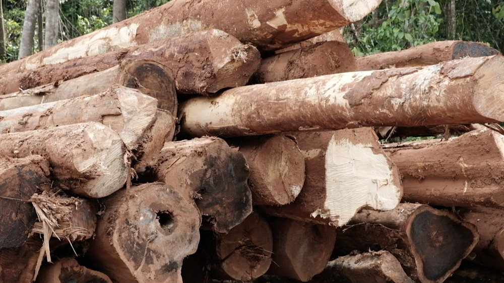 A short walk out of Tigoa brings you to the logging camps of Rennel. Piles of logs await the trucks to be hauled and loaded on to ships bound for Asia. Logging and bauxite mining have left devastated landscapes and impacted water sources in some areas.