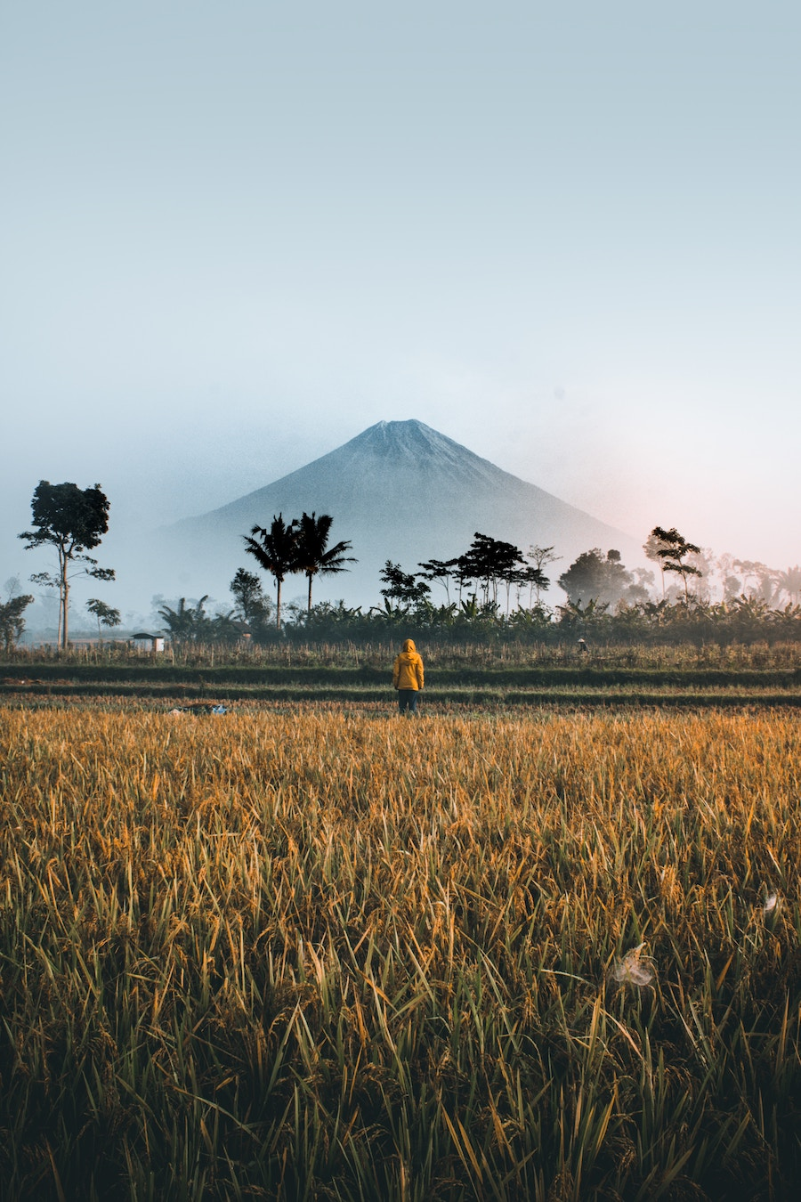 Oro Oro Ombo, Indonesia   |  Photo by  Ifan Bima