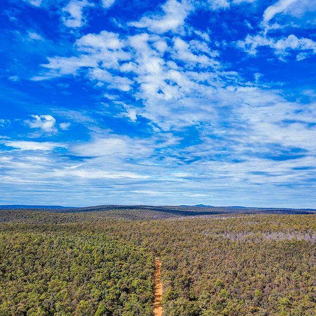 West Australian bush can really turn it on!