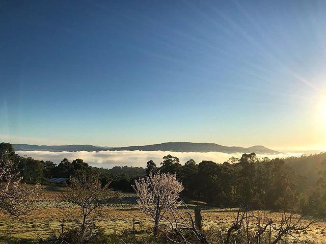 Frosty morning delight overlooking the almonds and north west bay. 30 August 2019, 7.24am . . . . . . . #frostymorning #ticklebackridgevineyard  #ticklebackridge #northwestbay #tasmania #fresh #almondtree #coolclimatewines #coolclimate #vineyardlife