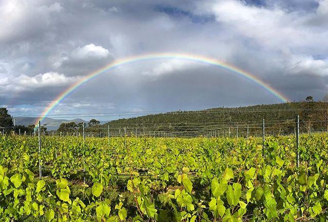 6.14pm Sunday 2 December, 2018. . . . . #rainbow #ticklebackridgevineyard #ticklebackridge #ticklebackridgewines #tasmania #tasmanianwine #vineyardlife