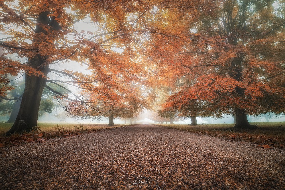 kedleston hall autumn landscape photography derby fine art clark photographic.jpg