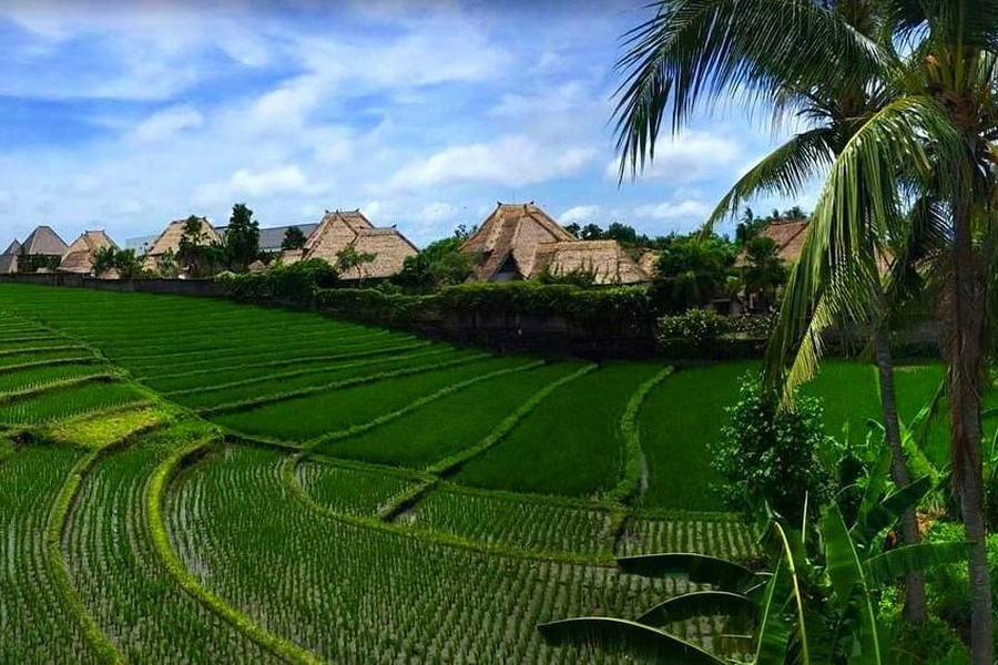 360° OF RICEFIELD VIEWS