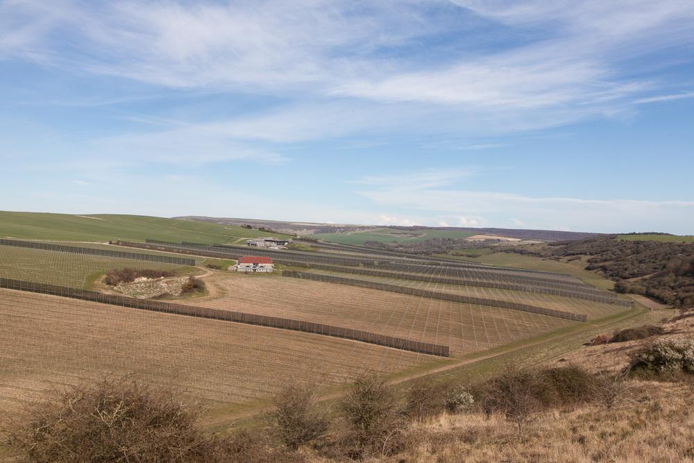 Fields and barns.jpg
