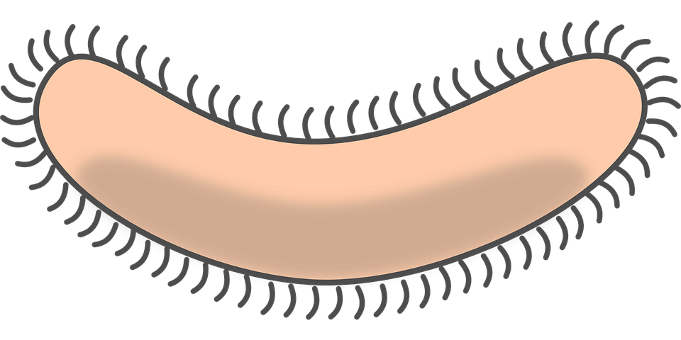 bacteria-297170_960_720.png