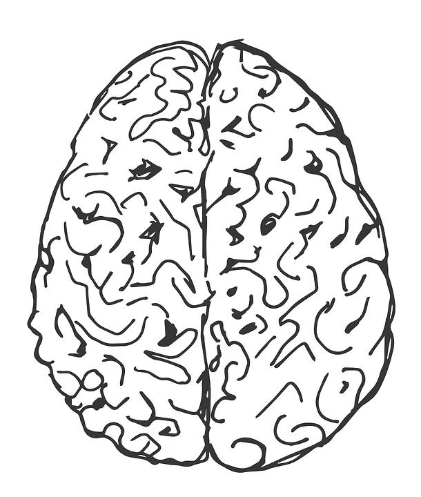 brain-1602757_960_720.png