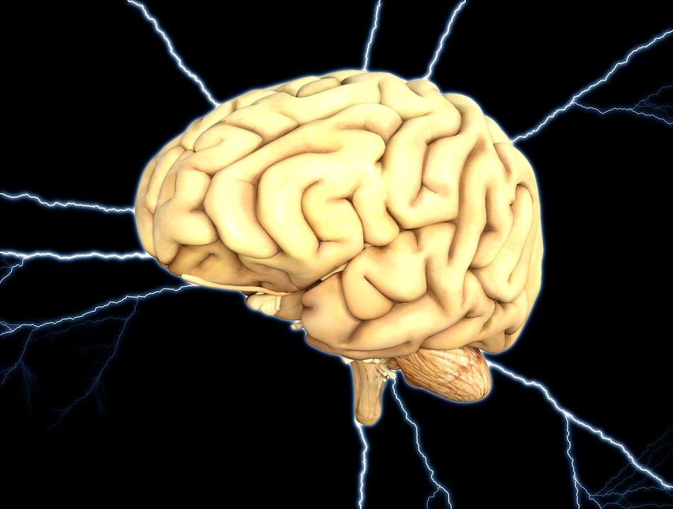 brain-1845940_960_720.jpg