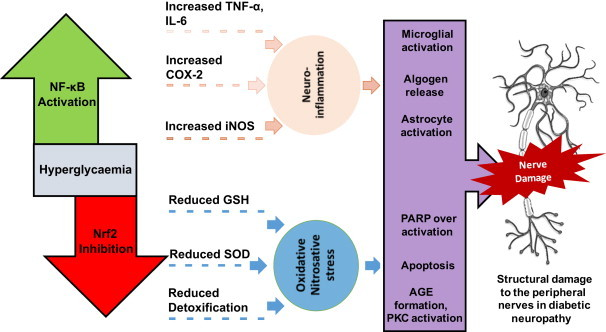 Why NRF2 Activation Can Make You More Sick – MyBioHack