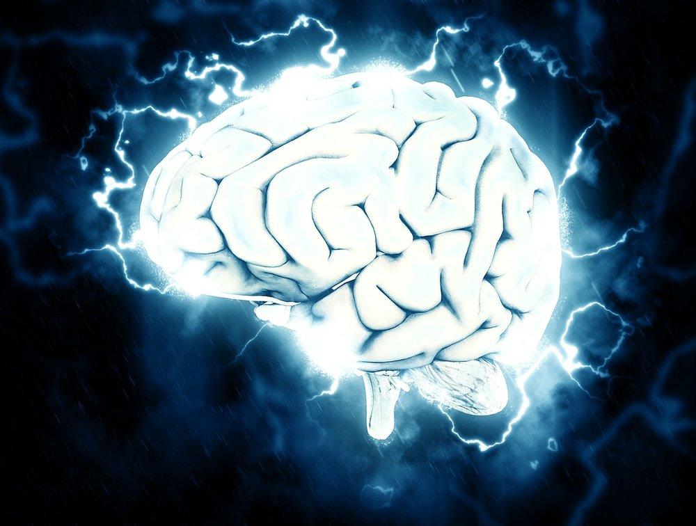 tyrosine brain