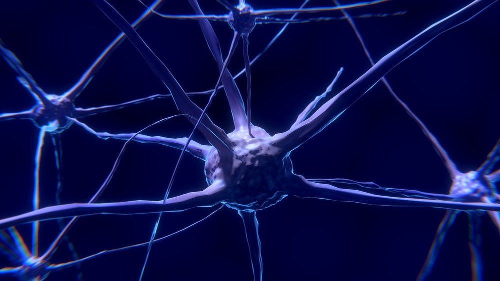 nervous system gadolinium