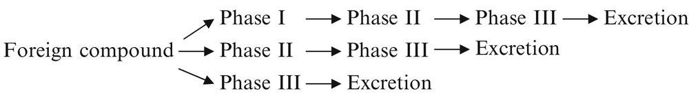 phase i ii iii order.jpg