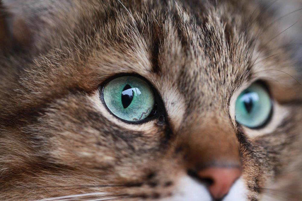 cate eye kiom.jpg