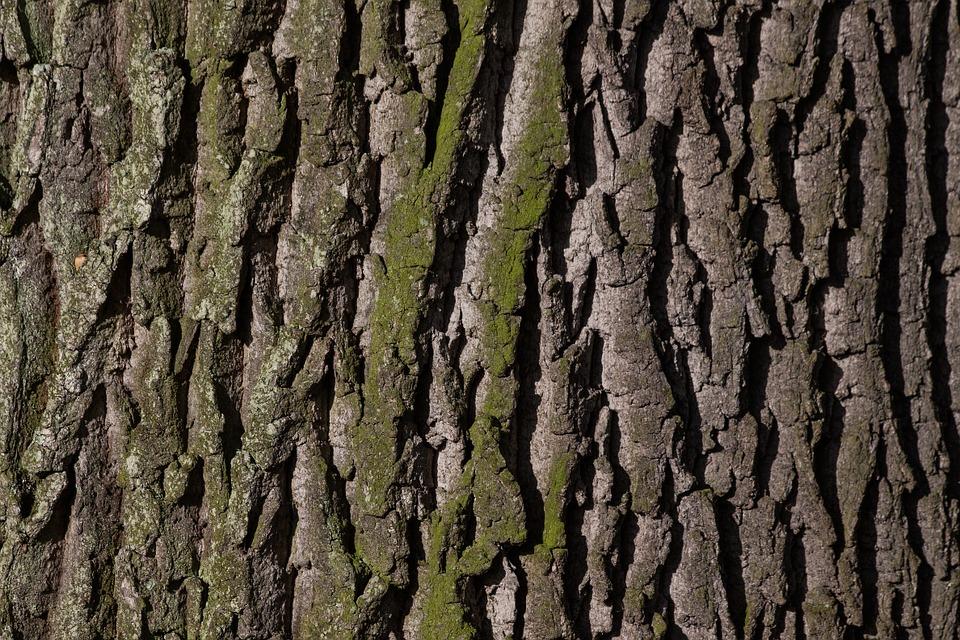 pine bark pycnogenol.jpg