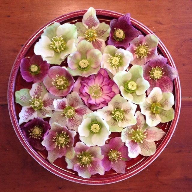 Hellebores in a Winthrop Byers bowl, courtesy of one happy bowl owner.
