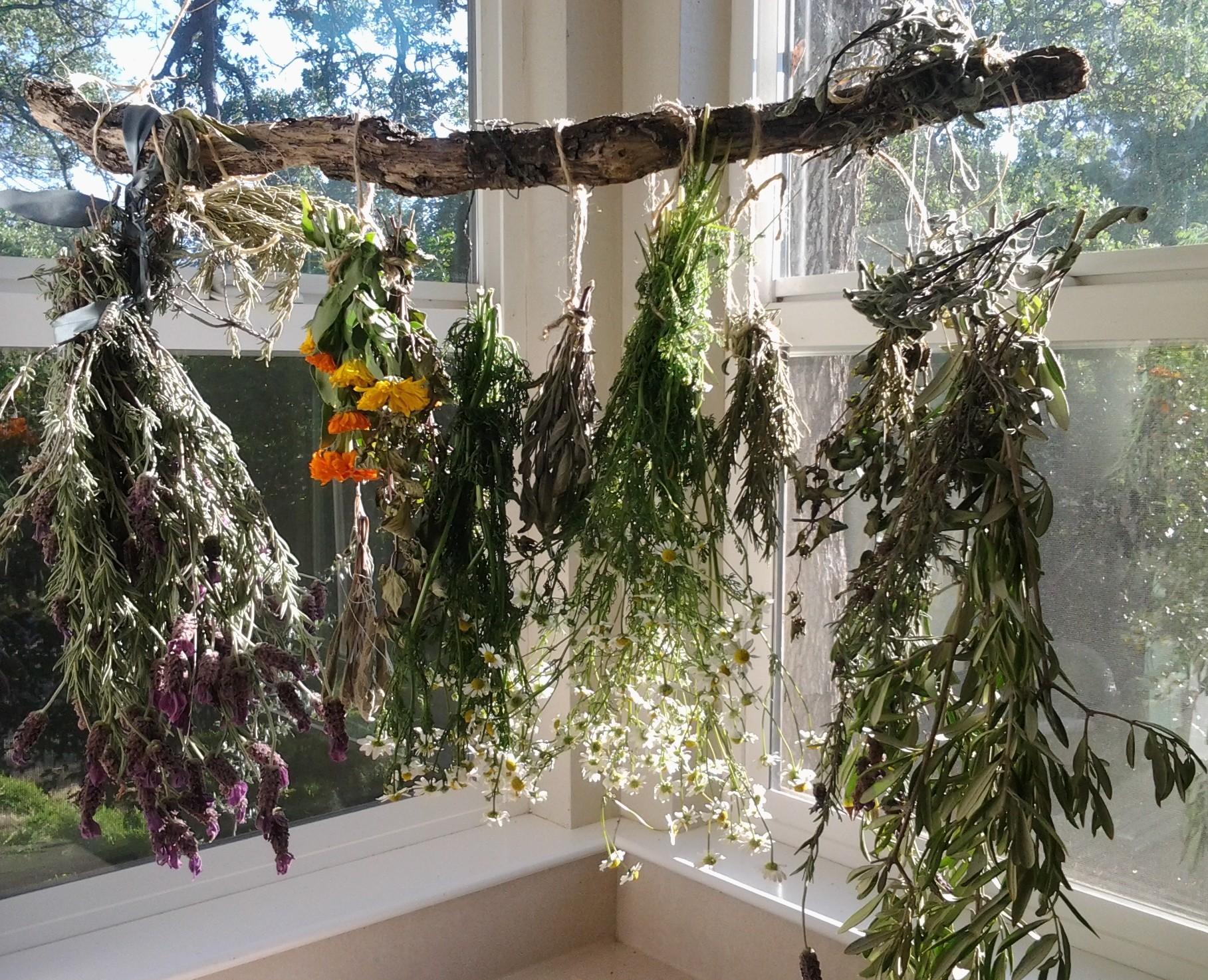 lavender,rosemary,calendula,rosemary,mint & chamomile drying