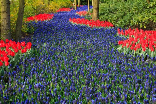 blue-flower-bed.jpg