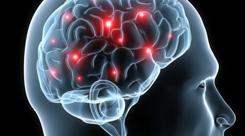 Brain - stylised.jpg