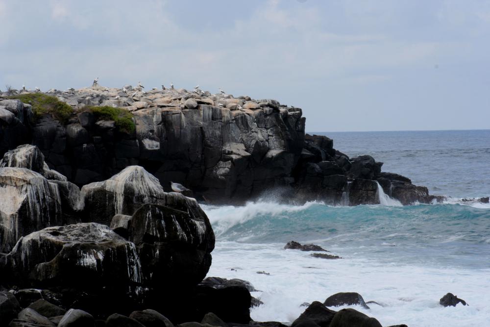 Punta Suarez060.JPG