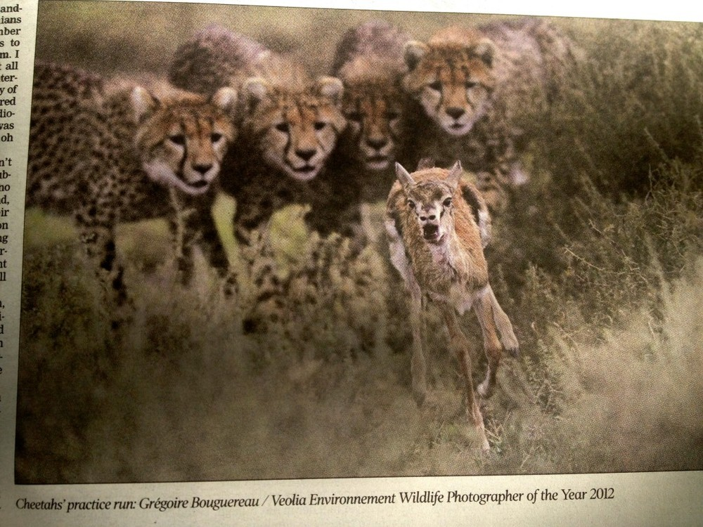 First thing I see in the local newspaper is this photo. Clearly the local news in South Africa would include something like this.