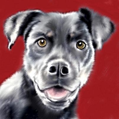 1-black dog.jpg