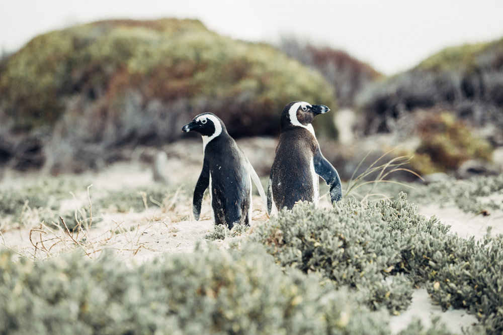 COASTAL PATAGONIA - Peninsula Valdes is world-famous for wildlife spotting and whale watching. Stay at a colonial home to explore this region of Patagonia.