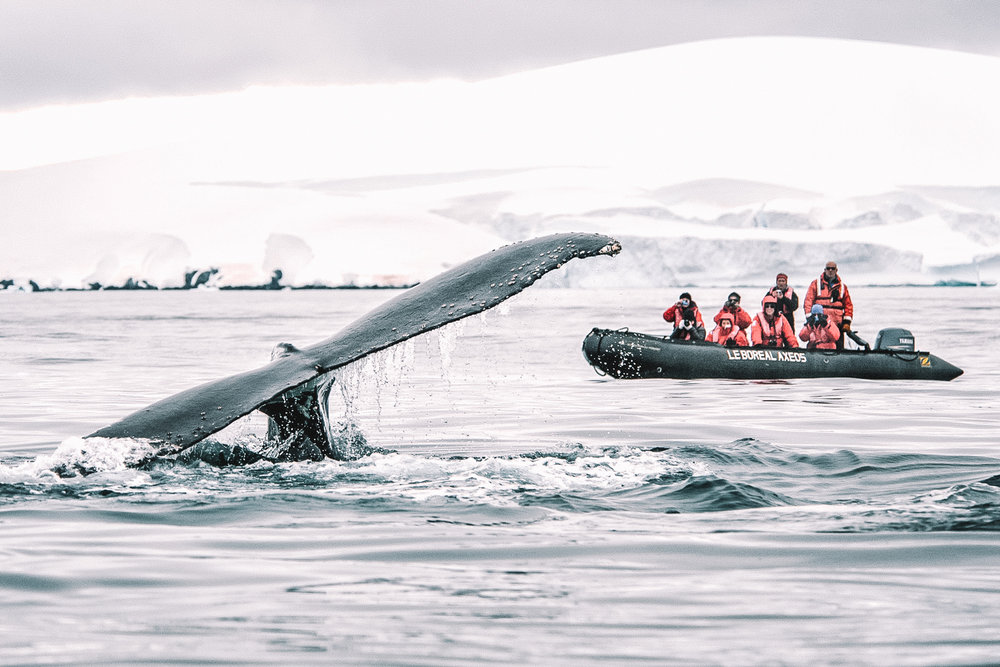 UP CLOSE & PERSONAL - Despite the extreme geographical conditions, Antarctica is home to some of the world's most fascinating creatures. Get up close and personal with majestic whales, emperor penguins, elephant seals and many more.