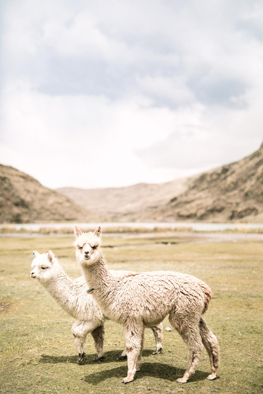 Tucci-Peru-6413.jpg