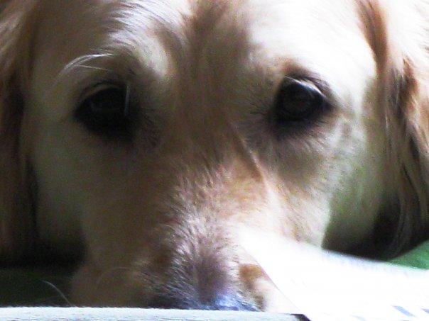 RIP Emma 2002-2016. A very, very good girl.