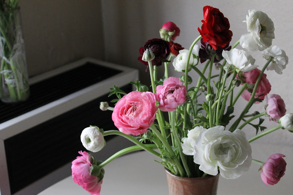 A mess of ranunculus is a vase made by a potter friend.
