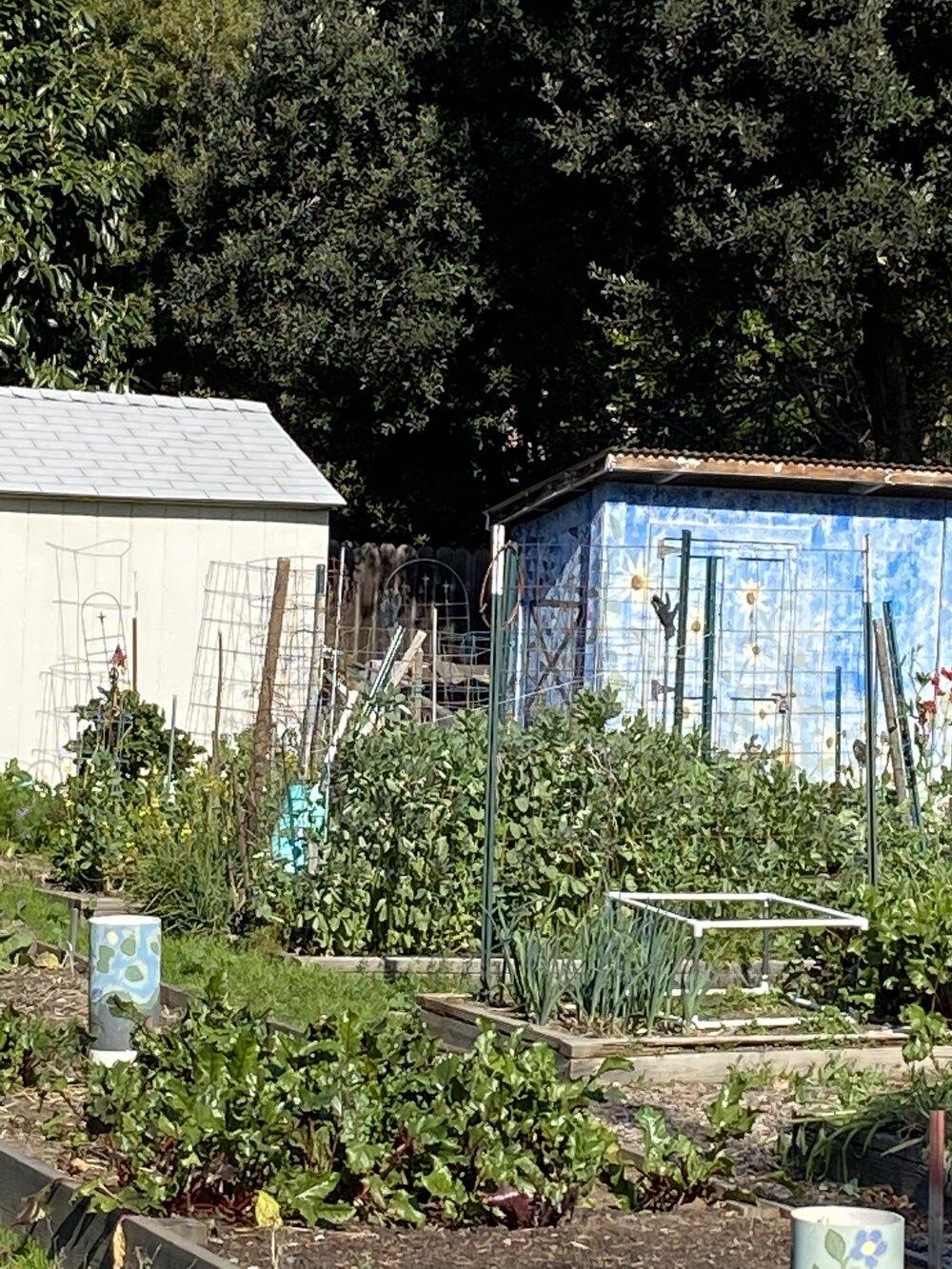 Programs The Garden Club Of Los Altos