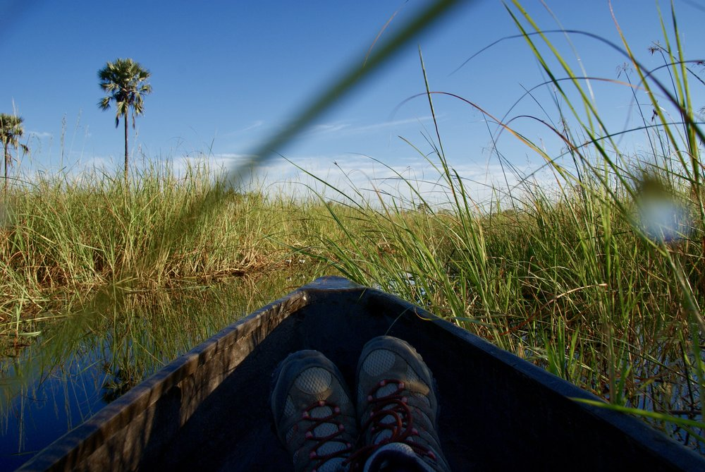 Exploring narrow waterways via Traditional Mokoro Canoe, OKavango Delta