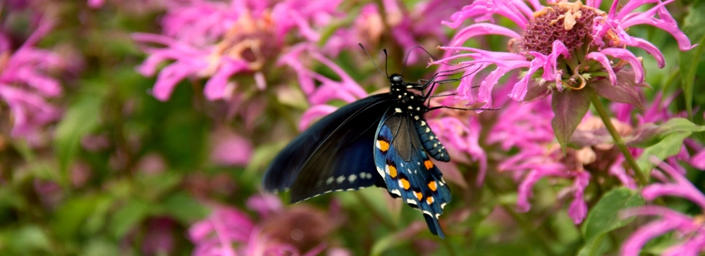 Butterflygarden Web