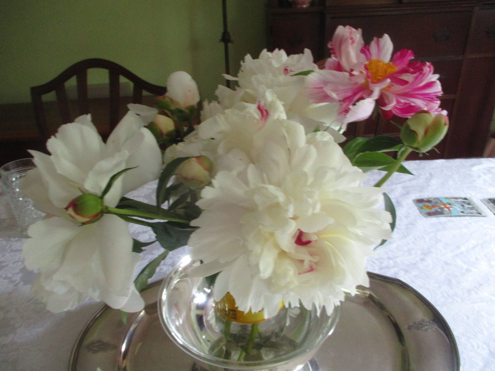 A friend brought me these beautiful peonies from his garden.