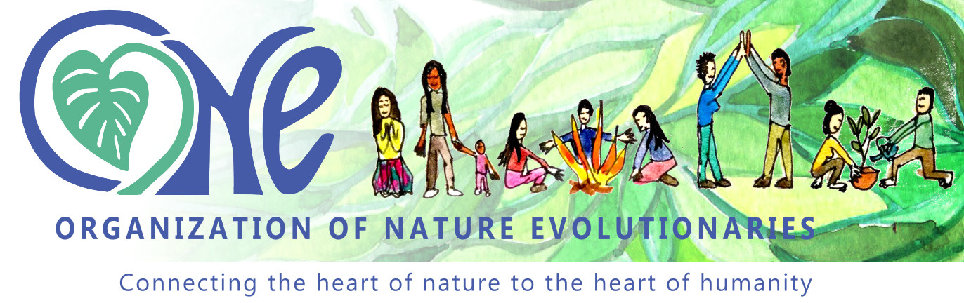 Organization of Nature Evolutionaries