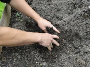 soil flowers 6 15 106