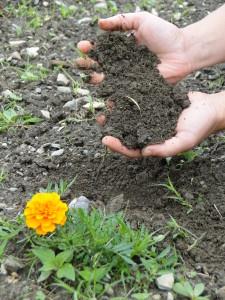 soil flowers 6 15 104