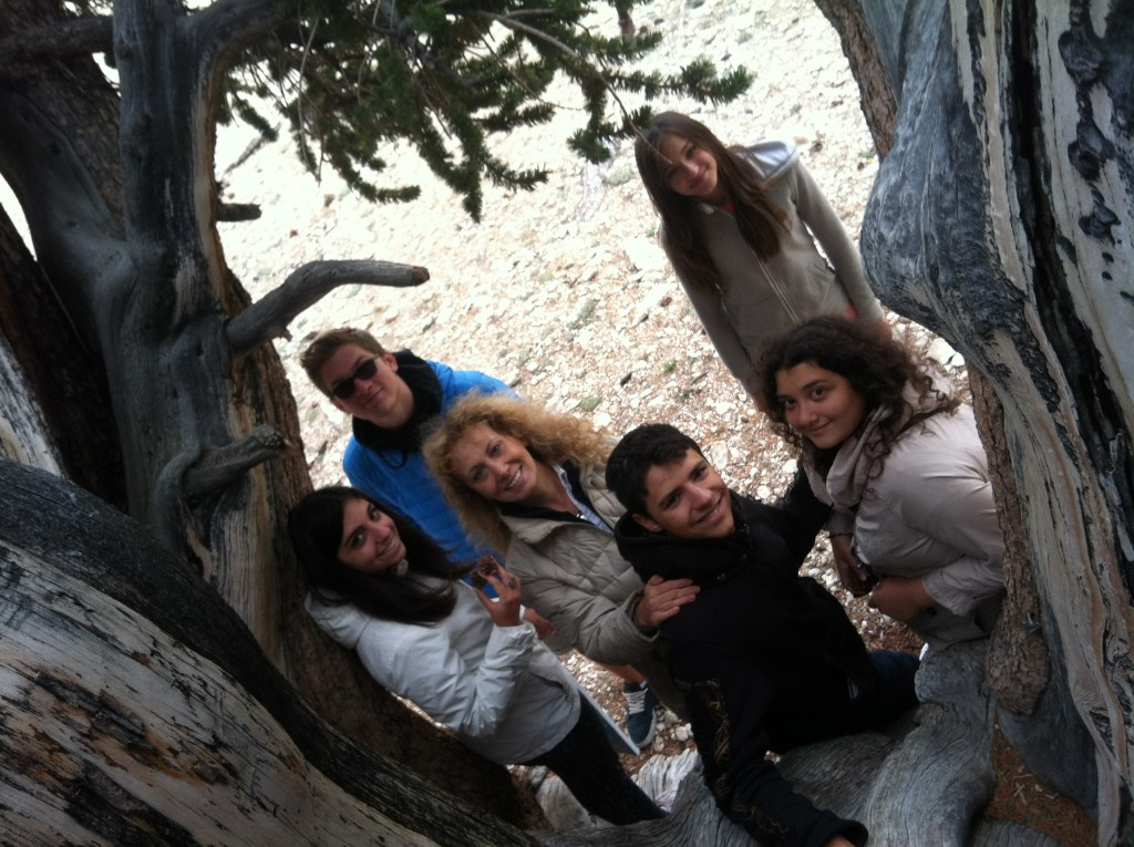 Esperide with Damanhur youth delegation and bristlecone pines in California