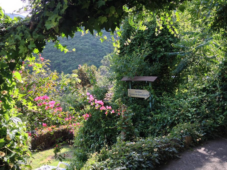 Gratitude For Sanctuary Gardens