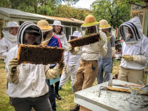 co-creative partnership with nature-bees