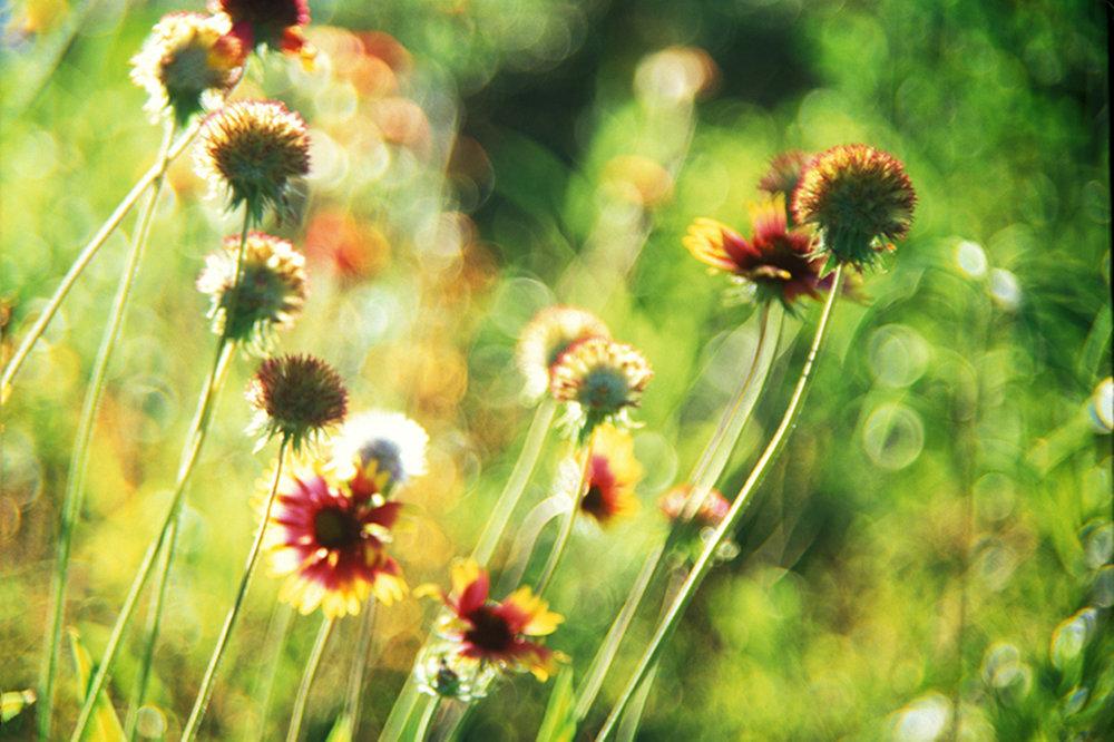Healing  Light in the Garden