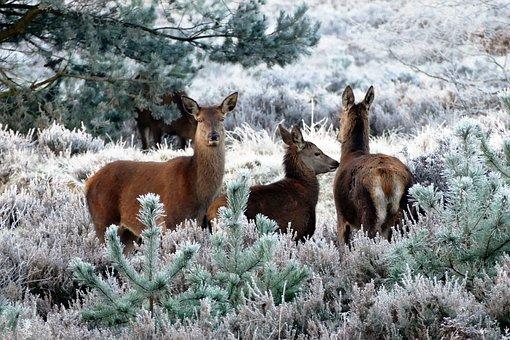 deer trees.jpg