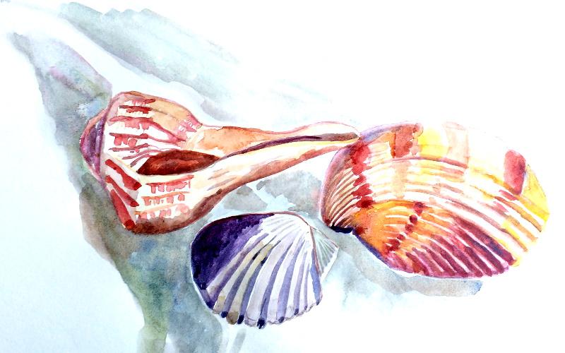 shell1small.jpg