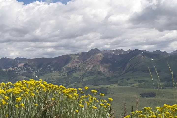mountains flowers.jpg